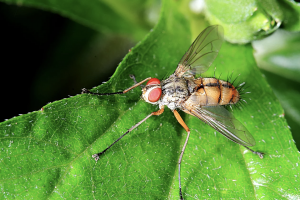 Are Fruit Flies Alive All Year? – Fruit Fly BarPro | The